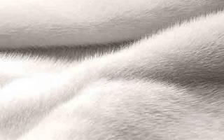 Как почистить белый мех от желтизны в домашних условиях?