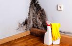 Грибок в доме – как избавиться?