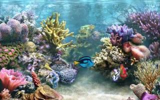 Как приклеить фон на заднюю стенку аквариума?