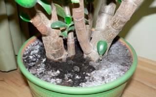 Как бороться с плесенью в цветочных горшках?