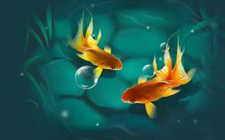Золотая рыбка в аквариуме – уход