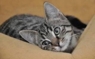 Как мыть котенка без вреда для него?