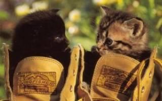 Кот пометил сапоги – как избавиться от запаха?