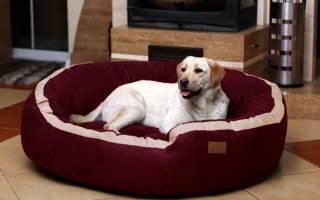 Как сшить лежанку для собаки?