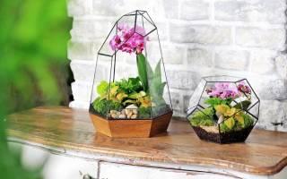 Живые цветы в стекле своими руками