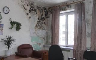 Антисептик от грибка и плесени на стенах