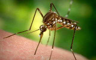 Как защититься от комаров?